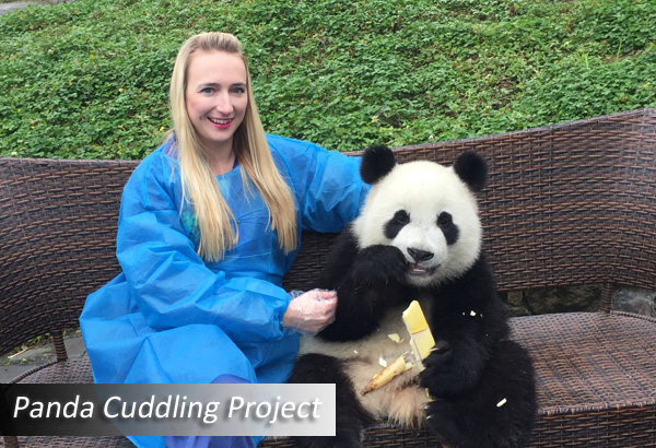 2018 Giant Panda Tour And Volunteering Only From 65